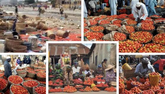 Yoruba People: A Leech in Nigeria's Development?